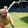 Spokojený pes