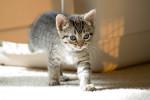Konečně začala platit přísná pravidla a zákaz testování na zvířatech