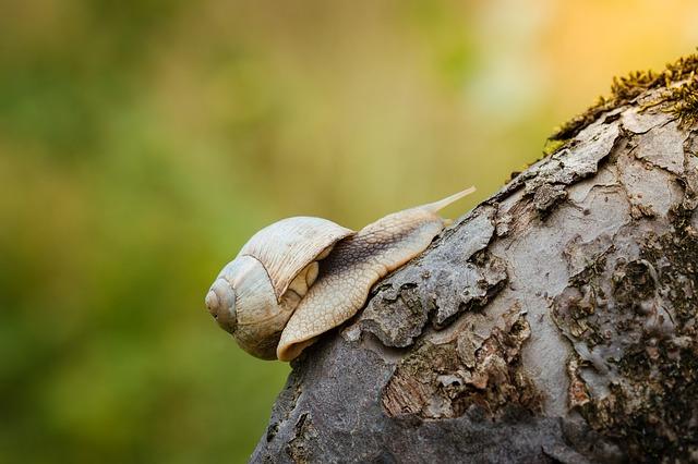 Pevná vůle – vrozená vlastnost nebo schopnost, kterou se lze naučit?