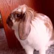Králíček - milý kamarád - Jak chovat králíka