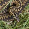Jak na uštknutí zmije