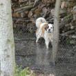 Mobbing není bossing Část 11 – Psi se bojí bouřky