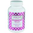 Echinacea: Bylinný dobíječ imunity