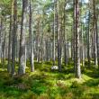 Jak zmenšit svou ekologickou stopu a zabránit pohromě?
