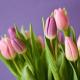 Udělejte sobě nebo blízkým radost krásnou kyticí