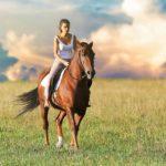 Rádi jezdíte na koni? Pořiďte si krásné a kvalitní vybavení za rozumné ceny